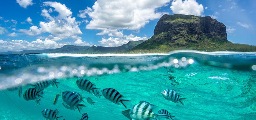 Magnificent Dubai Mauritius