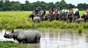 Land of One Horned Rhino Kaziranga