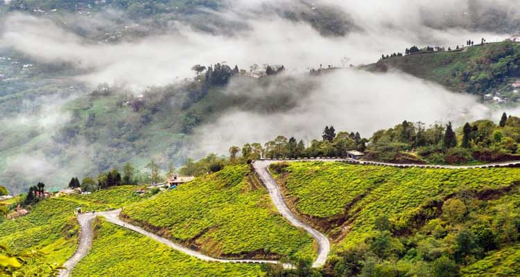 Queen of Hills Darjeeling