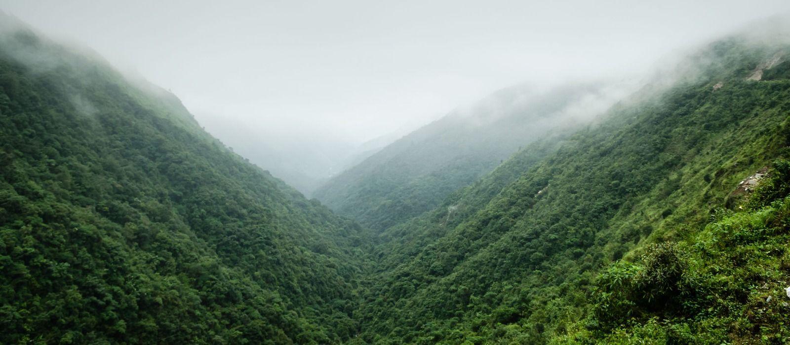 Fantastic Assam
